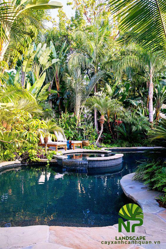Tropical garden (1)