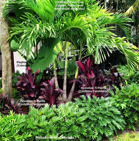 Tropical garden (11)