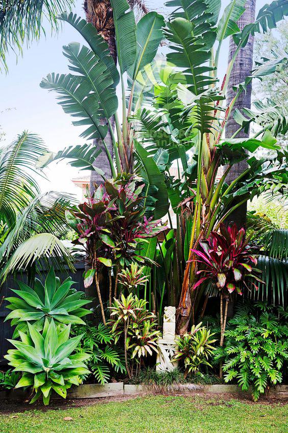 Tropical garden (13)