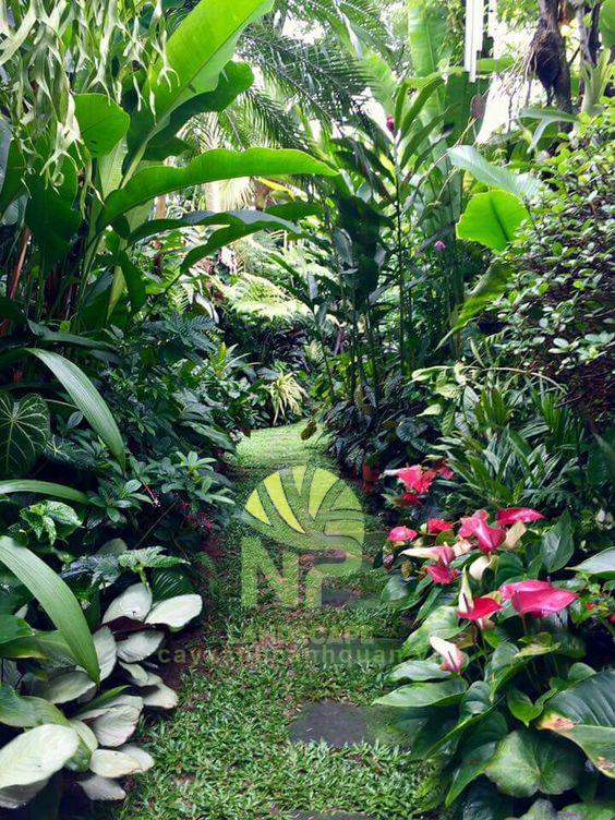 Tropical garden (14)
