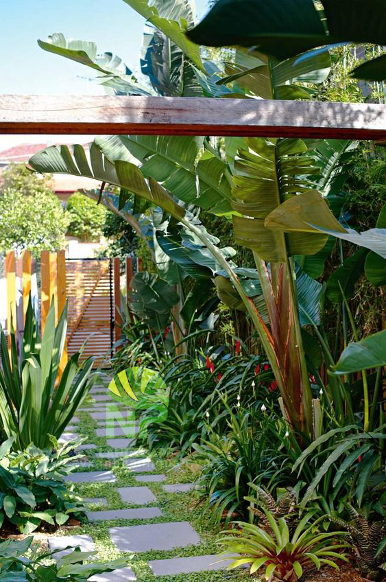 Tropical garden (18)