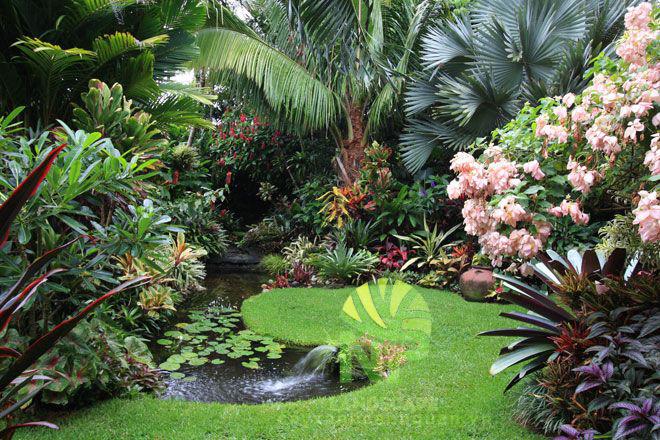 Tropical garden (19)