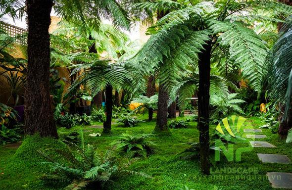 Tropical garden (2)