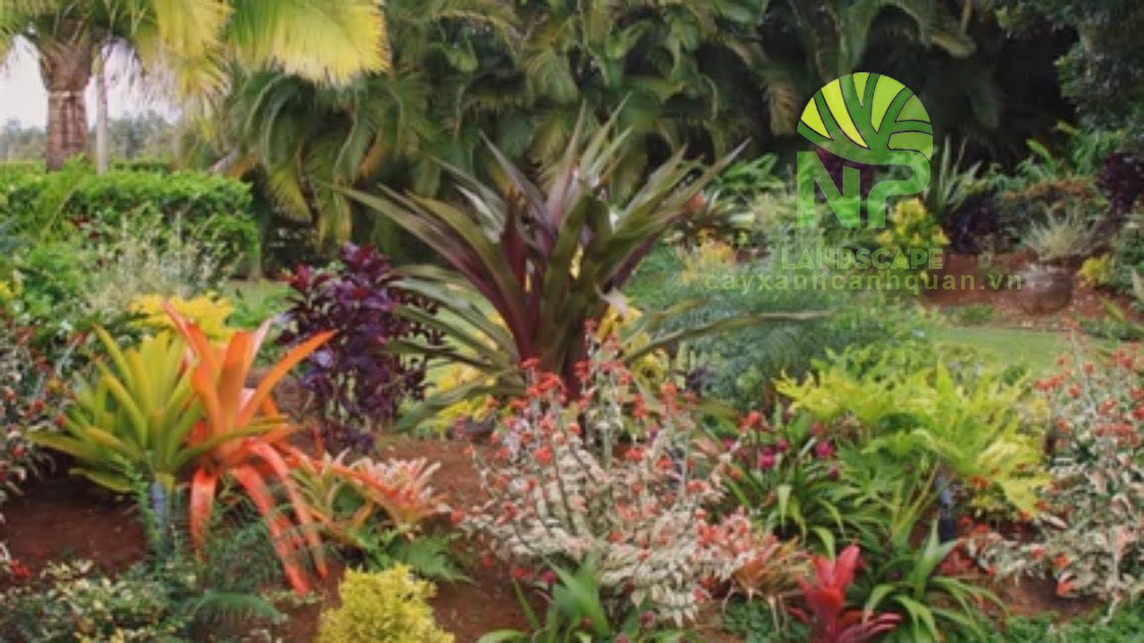 Tropical garden (3)