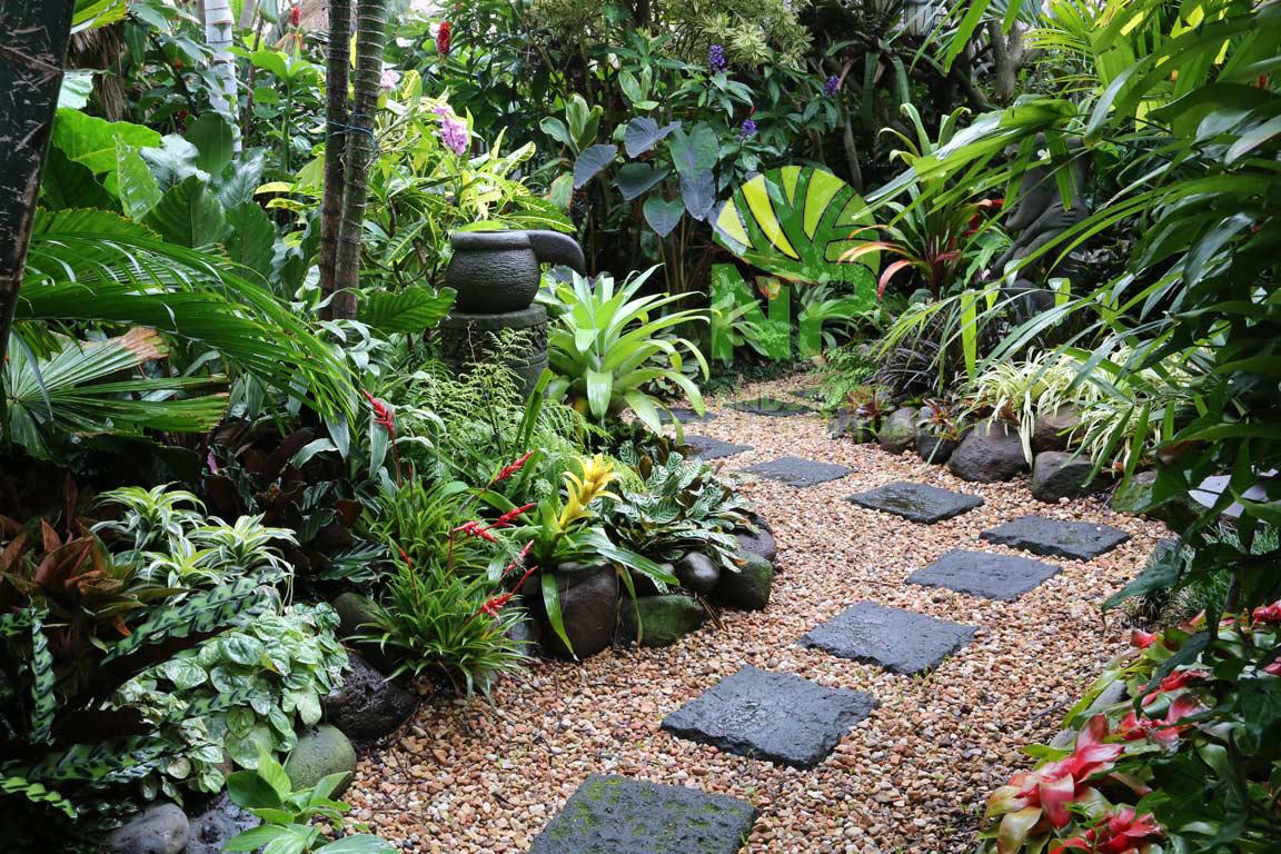 Tropical garden (4)