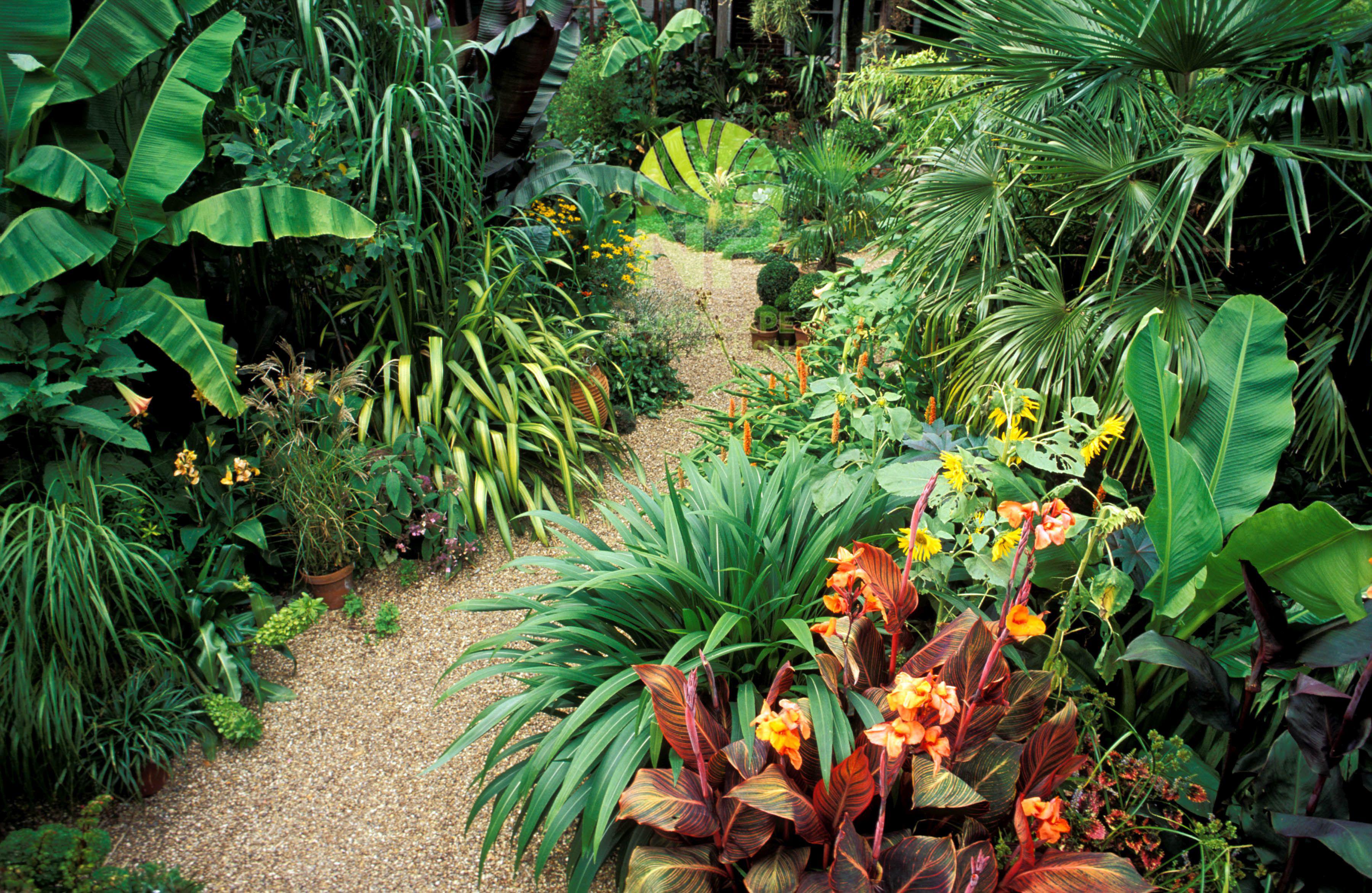 Tropical garden (6)