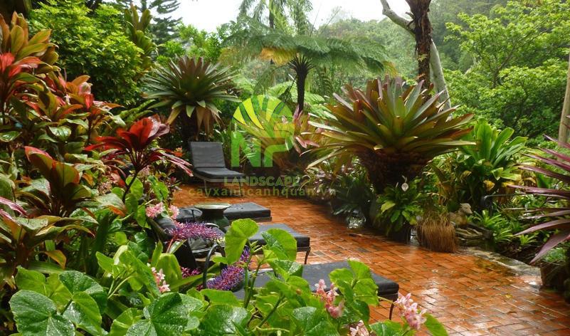 Tropical garden (7)