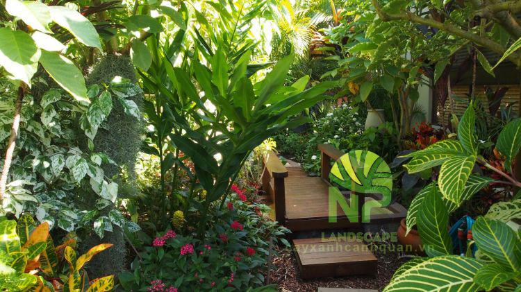 Tropical garden (8)