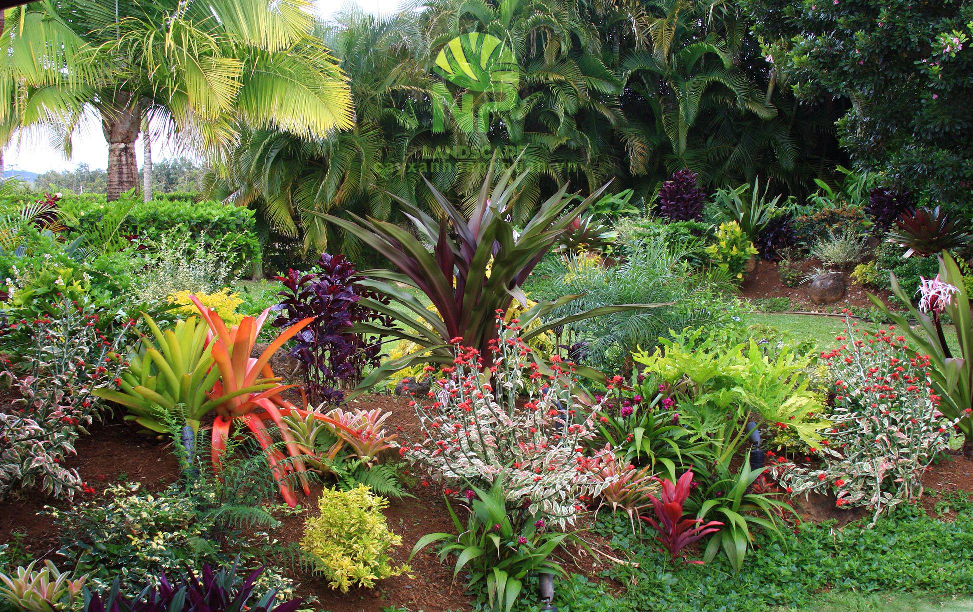 Tropical garden (9)