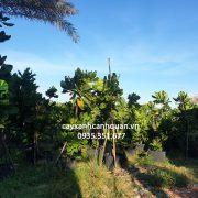 0935351677 - Bang vuong (9)