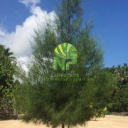 0935351677 - Cay Phi Lao (5)