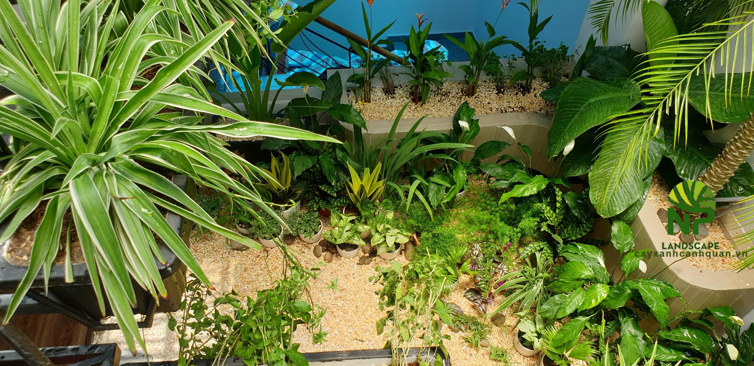 Tropical garden (31)